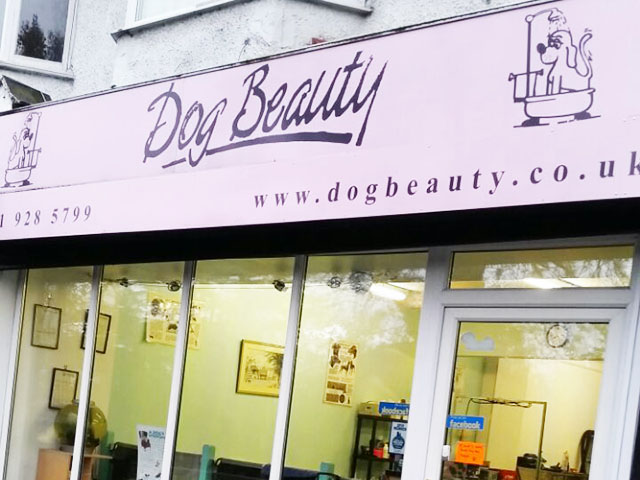 Popular Pet Grooming Business