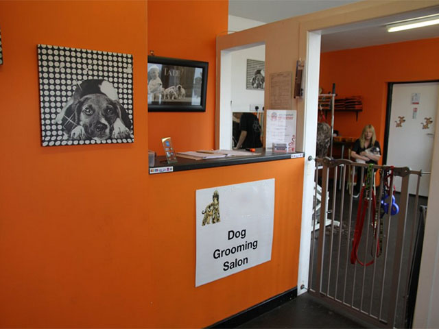 Well Presented Pet Grooming Business